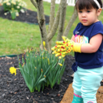 Gardening (and Crafts) with a Toddler 101