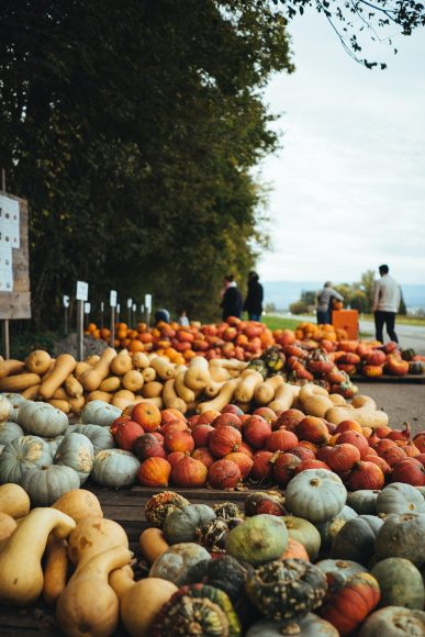 an outdoor market selling fall produce