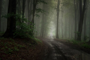Forest road through the fog. Mysterious road through the enchanted forest with fog. Mysterious fog and light in haunted forest path