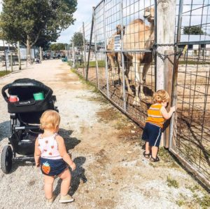 two toddlers out of the stroller and by a camel enclosure at Big Joel's Safari in Wentzville