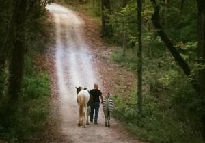 a man walking down a path with a horse and a zebra