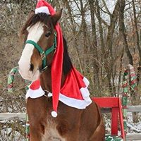a Clydesdale dressed up like Santa sitting on a bench in the snow