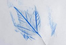 a leaf imprint made with crayon