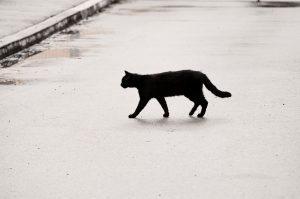 a black cat crossing a road