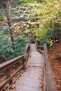 wooden steps leading down into the woods on a hiking trail, surrounded by autumn leaves on the ground