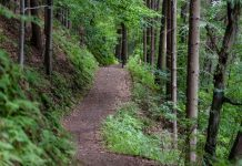 a path through the woods with green foliage and tall trees
