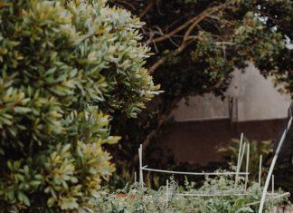 a backyard garden