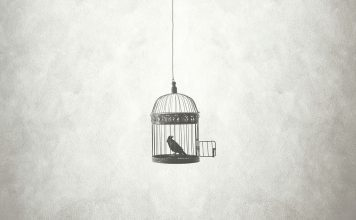 an open bird cage hanging from the ceiling with a bird inside, looking at the open door