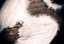 feathered angel wings and a feathered halo on a wooden background