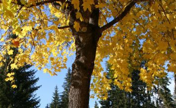 fall leaves of yellow and brown strewn on the ground under a tree